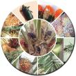 Oil Palm Pest Management